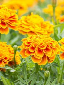 flower 2 1