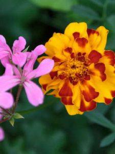 flower 3 2