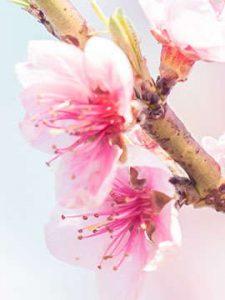 flower 5 1