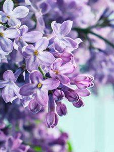 flower 6 1