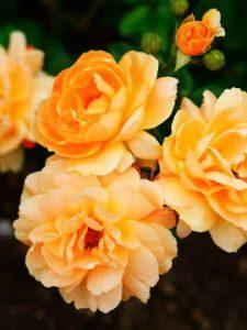 flower 9 1